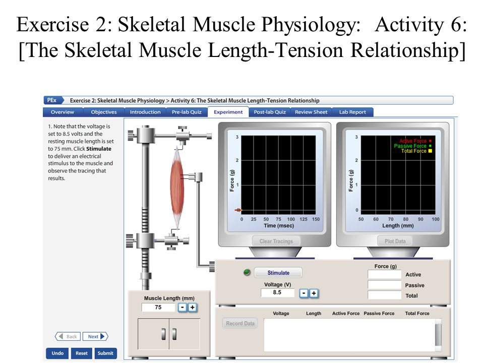 activity 6 the skeletal muscle length tension relationship